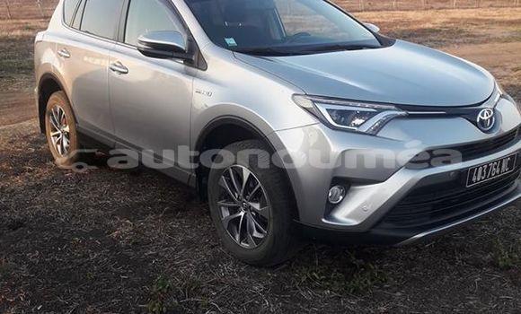 Acheter Occasion Voiture Toyota RAV4 Gris à Pouembout, Nord